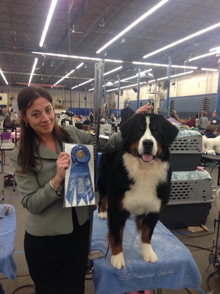 Dog Training Goshen Ct