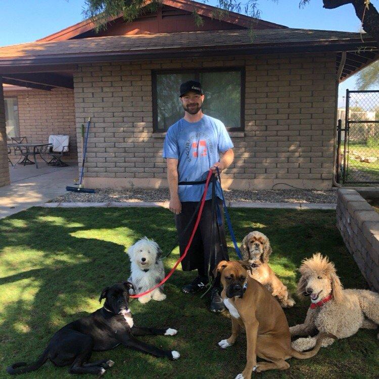 Clover Canine - 65 Photos - Pet Training - 38639 N 33rd Ave