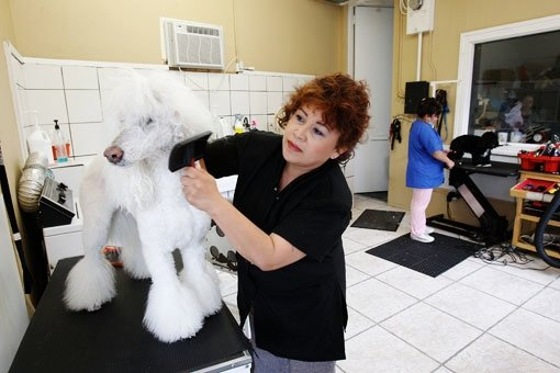 Mobile Dog Grooming Brentwood
