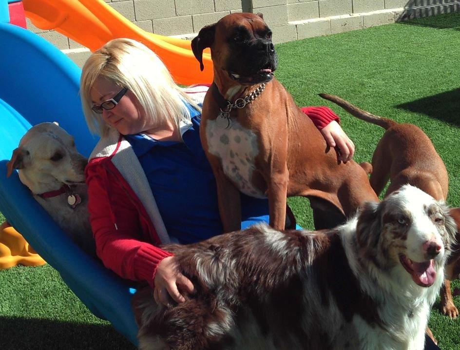 Doggie District Pet Resort & Training Center - 24 Photos - Pet ...