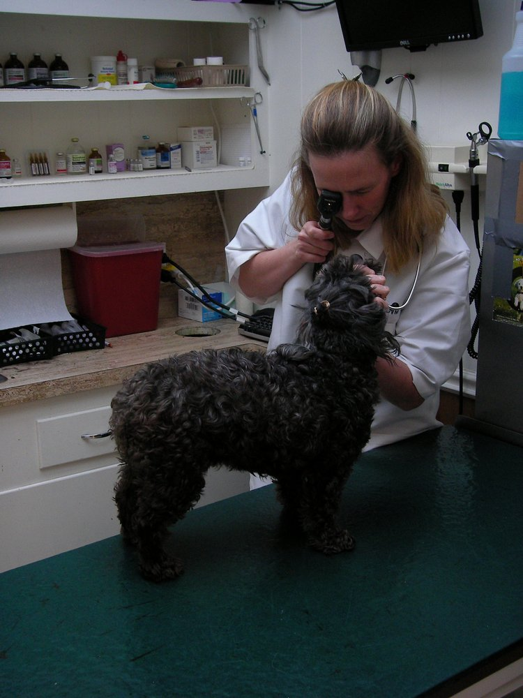 Oak Forest Veterinary Hospital 59 Photos 35 Reviews Vets 2120 W 34th St Oak Forest