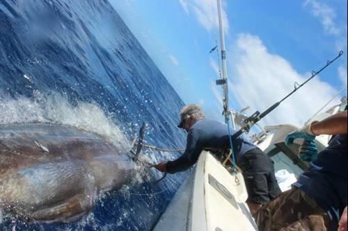 Deep sea fishing kauai 43 photos 29 reviews boat for Deep sea fishing trips near me