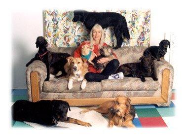 Dog Day Care Long Beach Ca