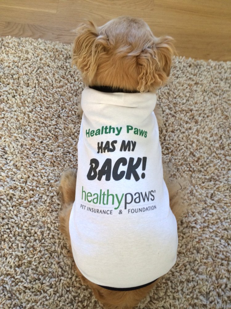 Healthy Paws is a pet insurance company based in Washington state that provides coverage for cats and dogs. They are underwritten by Chubb Group, a consistently highly-rated insurer.