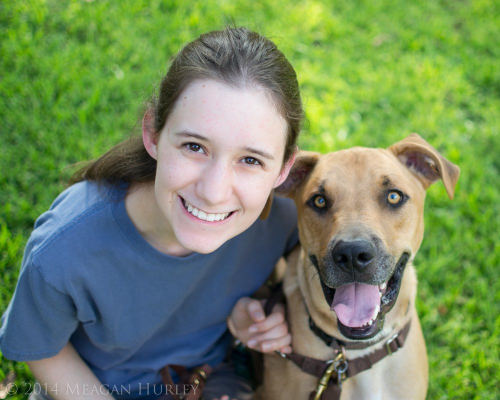 Creating A Dog Training Program For A Business