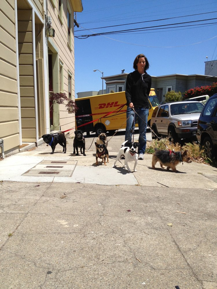 how to become a dog walker in san francisco