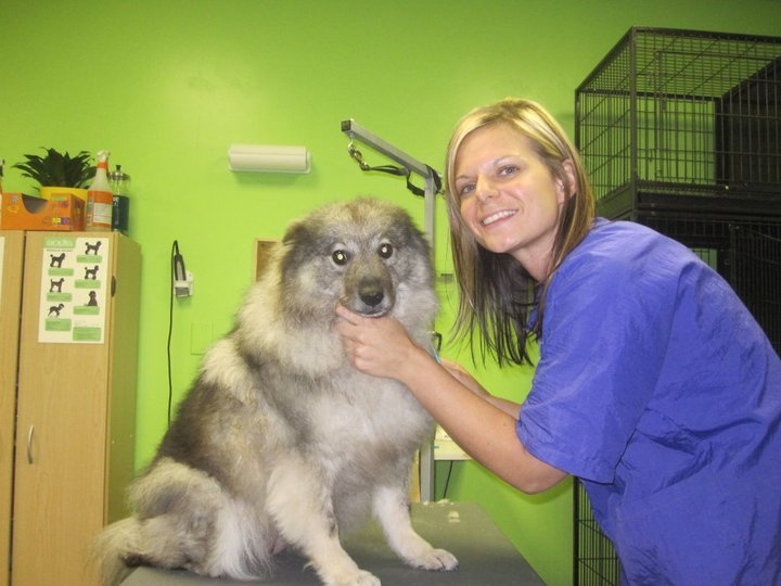 Institute Of Dog Grooming Rochester Ny