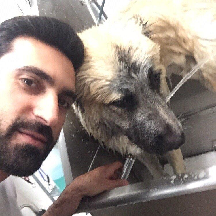 Dog Grooming Burbank