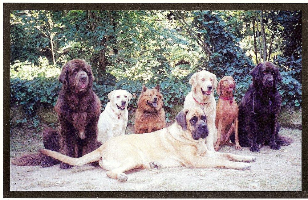Dog Days Dog Training Woodside Ca