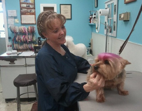 Barks And Bubbles Dog Grooming Las Vegas