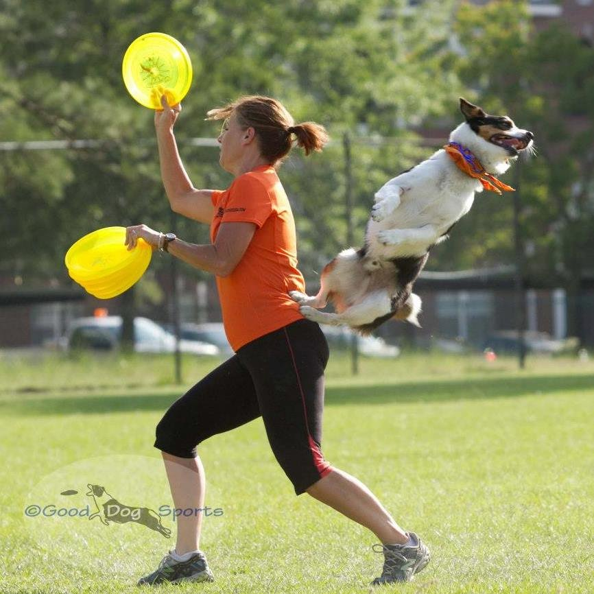 Smart Dog Training Houston Tx