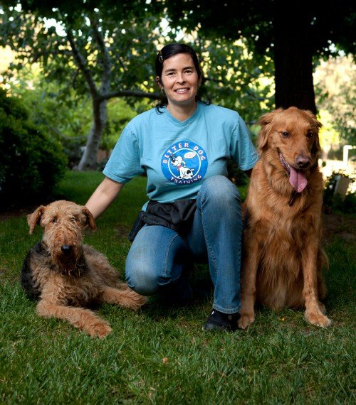 Image Result For Dog Training Classes Sango Ca