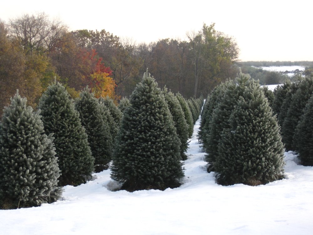 Comment from John W. of Wyckoff's Christmas Tree Farm Business Owner - Wyckoff's Christmas Tree Farm - 29 Photos & 11 Reviews - Christmas