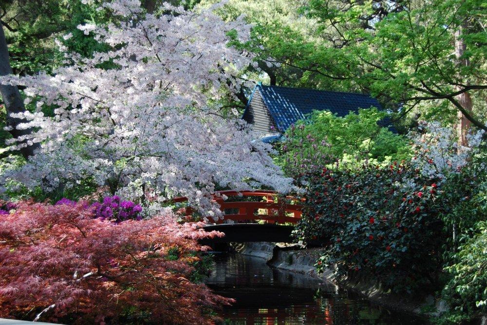 Cherry blossom festival at descanso gardens la canada - Descanso gardens cherry blossom festival ...