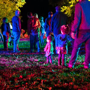 Enchanted forest of light at descanso gardens la canada - Descanso gardens enchanted forest of light ...