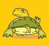 Turtle F.