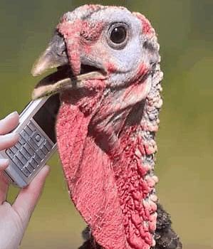 Turkey B.