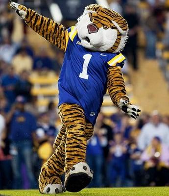 Tiger J.