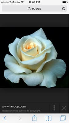 Rose B.