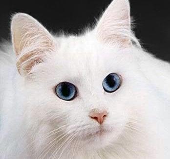 Kitty C.
