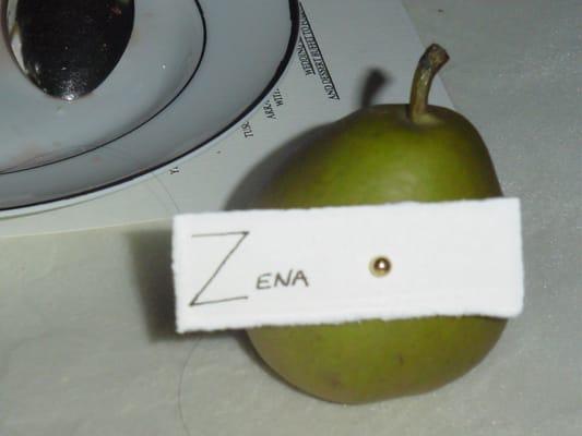 Zena B.