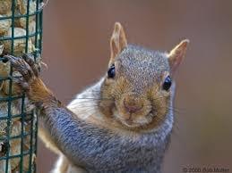 Squirrel-face S.