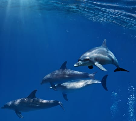 Dolphins R.