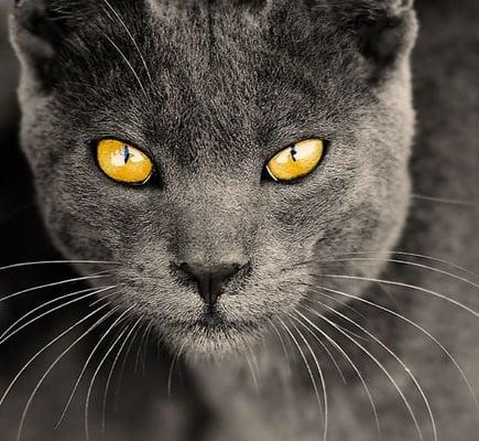 Kitty K.