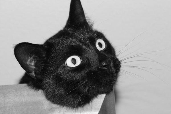Kitten M.