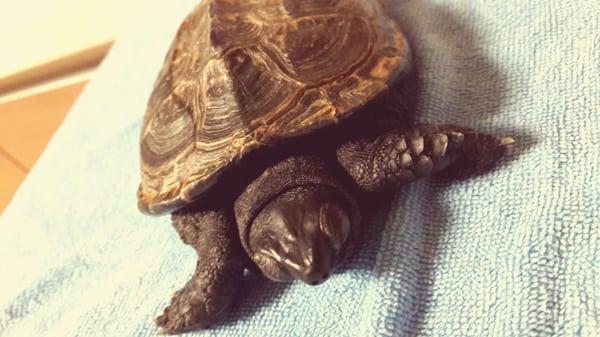 Turtle M.