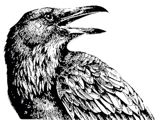 Raven L.