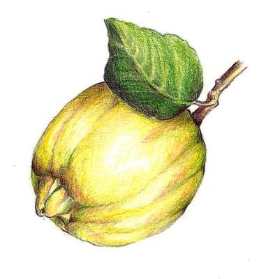 Lemon B.