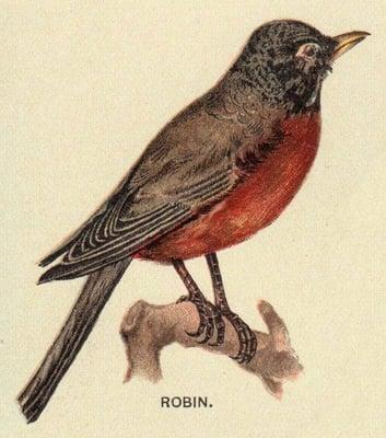 Robin H.