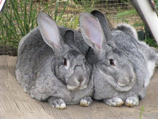 Bunny L.